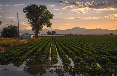 Vanishing Agricultural Perspective - Weld County, Colorado (Bryan Harding - Outside the Box Design Studio) Tags: longspeak agriculture colorado frontrange greatplains highplains irrigation water reflection crops weldcounty sunset clouds sky barn field ranch history twilight farm