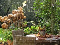 5806 Autumn Patio (Andy - Busyyyyyyyyy) Tags: 20161110 bhday13 broughholiday ccc chairs harome hhh leaves lll patio pergola ppp seats seedhead sss tables thepheasantinn ttt yorkshire