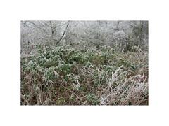 Frost II. Gatten (Northern Jutland), Denmark (2008) (csinnbeck) Tags: frost frozen ice winter denmark 40d canon eos 1740mm f4 1740l 2008 december bushes brush shrubbery jylland jutland dk 9600 gatten aars hornum cold