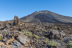 The Teide volcano is surrounded by lava fields (Ivanov Andrey) Tags: mountain volcano pine tree needles hill lava slope valley desert rocks sky clouds horizon stone sand island plant flower bush grass yellow sulfurblack sun noon blue landscape perspective path road ascent descent shadow mountainrange mountainpeak nature travel tourism spain canaryislands tenerife teide