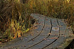 Slippery When Wet (Jan Nagalski) Tags: wood woodgrain wet damp wetland boards boardwalk perspective curve lowangle fall autumn troynaturecenter troy michigan jannagalski jannagal explore explored