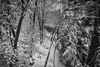 Cliff Hanger Deck View, 2016.11.20 (Aaron Glenn Campbell) Tags: a6000 sony mirrorless ilce6000 rokinon 12mmf2ncs wideangle primelens manualfocus snowfall snow trees thornhurst lackawannacounty nepa pennsylvania bw blackandwhite macphun luminar nikcollection wooded lehighriver