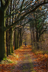 walk on sunday (maxgrosser) Tags: sony a6000 minolta af 50mm avenue wood weg hund herbst