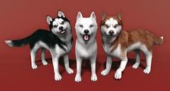 JIAN Huskies (Arcade Dec 2016 Preview) ([JIAN]) Tags: secondlife mesh pet pets dogs canines companion jian gacha preview wip