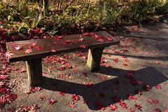 Autumn was here HBM (Irina1010 - out) Tags: bench woodbench hbm leaves maple red light shadow canon