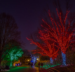 20161201 Brew Lights at the Zoo-3612 (Lora J Photography) Tags: zoolights fonz brewlights nationalzoo