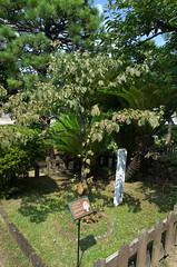 Willem-Alexander tree Dejima