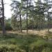 201014_asms_04_ panorama