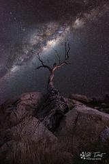 The Copeton Tree (Kiall Frost) Tags: tree night stars photo highiso milkyway kiallfrost