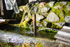 TOKUSHIMA DAYS - Kamikatsu (junog007) Tags: autumn mountain water fountain japan spring nikon shikoku tokushima d800 2470mm kamikatsu nanocrystalcoat