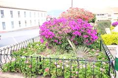 "Jardines en Tibasosa • <a style=""font-size:0.8em;"" href=""http://www.flickr.com/photos/78328875@N05/23165562024/"" target=""_blank"">View on Flickr</a>"
