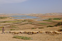 (claudiophoto) Tags: meknes morocco marocco fes africa nordafrica pastore pecore lago