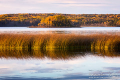 Lac Matapdia, Dernier rayon (Aurelien Pottier) Tags: sayabec mrcdelamatapdia bassaintlaurent gaspsie gaspepeninsula provincedequbec canada paysage landscape lacmatapdia lakematapdia lac lake eau water herbes herbs le island automne automnal autumn fallseason fort forest nature naturel natural coucherdesoleil sunset dusk crpuscule vgtation vegetation outdoor extrieur arbres trees octobre october bassaintlaurentqubec ca