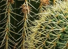 Ouch... (pmenge) Tags: denver botanicgarden espinhos cactus 18135 xt1