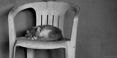 HIPOFRENIA, Sentimiento de Tristeza sin causa aparente. (Lucia Cortés Tarragó) Tags: cat chair canon bw love kilig white animal
