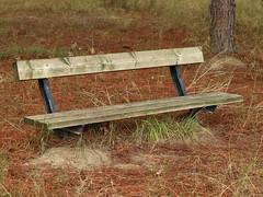 Banco en pinar (Javier Garcia Alarcon) Tags: banco asiento pinar bench parkbench bank