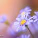 blue+light+autumn