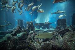 Aquarium in Atlantis (Filippo Photos) Tags: dubai portraits 1dxmarkii thepalm atlantis dubaimall valentina acquario crescent jumeira sym burjkhalifa