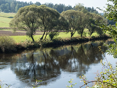 Trees along river Regen (schauplatz) Tags: bayerischerwald bayerwald deutschland lamerwinkel urlaub river fluss regen gegenlicht backlight backlighting spiegelbild mirrorimage