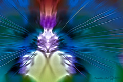 Spirit animal (CaBAsk ♥Thank U for visiting ♥) Tags: abstract art animal spirit lumia digital manipulation photoshop blue red flame fire expression imagination fantasy crazygeniuses hypnotized artdigital
