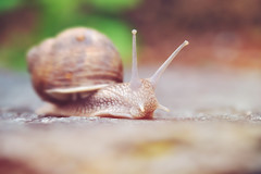 fast and furious (C-Smooth) Tags: snail lumaca natura macro fast