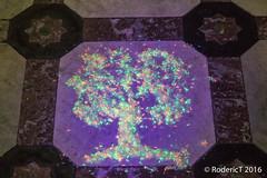20161029-IMG_9238 Ultra-Violet Light Rice Seeds Tree Compton Verney Warwickshire.jpg (rodtuk) Tags: phototypes 80d plant england art nature b23 places warwickshire comptonverney kit midlands uk misc photographicequipmentused