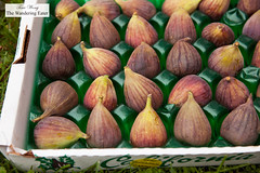 California grown Brown Turkey Figs (thewanderingeater) Tags: californiafigs figs cake dessert