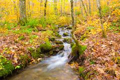 Flowing water, Rogart Mountain (wpc302) Tags: rogartmountain nikon ns nature novascotia d3300 dslr water fall autumn waterfall flow longexposure sugarmoonfarm foilage stream hike creek