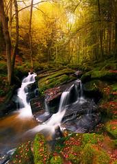 Waterfall (Dg.63) Tags: autumn trees waterfall nature light canon 6d