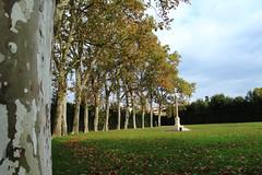 Giardino Boboli. (Federica Zampaolo) Tags: giardino boboli firenze natura alberi