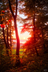 Abendlicht (art180) Tags: christianmichelbach abend ammersee art180 baum bayern breitbrunn hdr romantik rot schein see sonne sonnenuntergang strahlen wald ffnung forest rays light licht sun sundown evening bavaria romantic red glimmer laub autumn fall germany buchen beech
