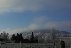 Nebeltag (ute_hartmann) Tags: nebel sonne landschaft