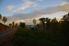 DSC_3223 (UdeshiG) Tags: mountain hike hillcountry teaestate mist sambar eagle hortonplains ohiya sunrise sky haputale nikon trek adisham