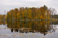 Schweingartensee (*MH*) Tags: deutschland mecklenburgvorpommern mv müritznationalpark zerrann schweingartensee see nationalpark buchenwälder naturschutz herbst spiegelung mecklenburgischeseenplatte landscape