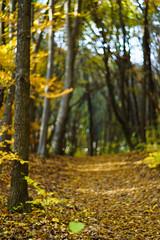 DSC00687 (gabriella.lavati) Tags: sony a6000 schneider kreuznach xenon edixareflexversion m42 50mmf19 manualfocus manual mflens nature spring sesoned color forest wood leaves bokeh bokehdream
