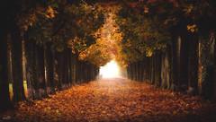 Autumn Boulevard (VandenBerge Photography) Tags: nature canon trees lane leaves autumn switzerland season light colors