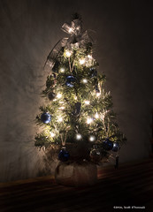 Tabletop Christmas Tree (scottnj) Tags: tree ornaments christmas christmaslights christmastree christmasseason 2016 christmasdecorations yule yuletide ribbon bow scottnj scottodonnellphotography 330366 cy365 365project redditphotoproject reddit365
