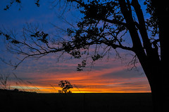 Leaning Limb Sunrise (thefisch1) Tags: sunrise sunflower shilhouette tree sky cloud color colorful horizon kansas limb branch