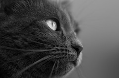 L'insaisissable (Thierry.Vaye) Tags: cat chat louna bokeh sigma f14 50mm