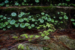 Nacimiento Rio Mundo JAL0025 (dedaimiel) Tags: riomundo naturaleza paisaje landscape nature jalriomundo