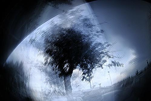 l' albero ed io