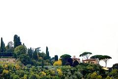""" IIIOoIYYo - UpHill "" (Petra U.) Tags: italien italy florence hill firenze florenz toskana hgel pinien zypressen"