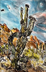 Saguaro With Half Moon (Kerry Niemann) Tags: saguaro goldcanyon inkandwatercolor