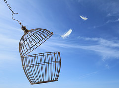 Freedom concept. Escaping from the cage (gius_coppolino) Tags: door blue sky pets bird birdcage metal bar liberty hope freedom fly flying justice iron break peace escape open symbol lock dove background empty flight wing feather free cage security safety greece prison jail law secure concept conceptual ideas entry gaol arrest prisoner imprisonment captivity barred confined penitentiary escaping detention liberated
