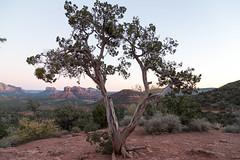 Red Rock State Park (dmitry.antipov) Tags: arizona 6d 241054lis