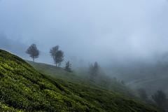 Munnar (Velachery Balu) Tags: rosegarden munnar echopoint topstation eravikulamnationalpark psmtour mattupattydam chinarwildlifesanctuary anayirangal karimuttamfalls
