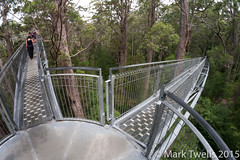 Treetop Walkway (Mark Twells) Tags: au australia walkway canopy westernaustralia treetop tingle walpole tingledale