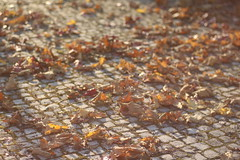 (Joo Quintela) Tags: november autumn oktober cold folhas portugal leaves digital canon john dead photography leaf jean ivan ground september mais cannon fading fotografia dezember folha terra novembro frio outono colder joo leiria setembro giovanni mortas outubro calada terreno unframed vermelhas cinematographic cinematogrfico caonn quintela cinematogrfica cinematogrficas 700d cinematogrficos