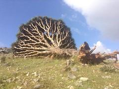 Socotra www.elrincondesele.com (josemiguel_80) Tags: