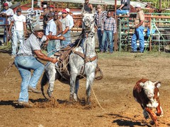 No Worries (clarkcg photography) Tags: calf roping rope horse work rodeo hobby practice jackpot rentiesville gettogether locals connorsropingteam